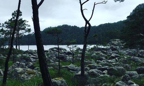 gc geocaching norwegen skogli
